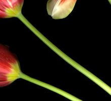 Pot of Tulips Sticker