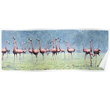 Flamingos of the Caribbean Poster