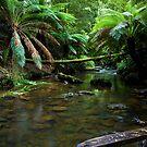 Hopetoun Creek by Matt  Streatfeild