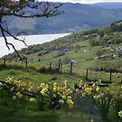 Loch Ness from a Macdonald house by BronReid