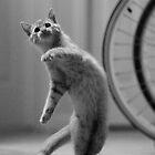 Dancing Cat by Erik Holladay