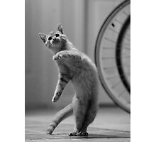 Dancing Cat Photographic Print