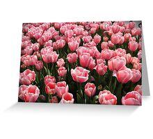 Tulips of Istanbul-TURKEY Greeting Card