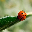 Ladybird by Heather Thorsen
