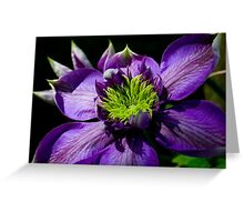 Clematis, Garden Beauty Greeting Card
