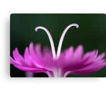 Macro Flower II Canvas Print