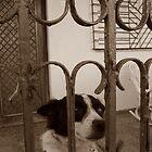 A Little Dog's Gaze by apricotargante