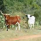 A pair of longhorns by jabrwill