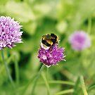 Bumble bee, Geffrye Museum, Shoreditch, London by BronReid