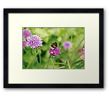 Bumble bee, Geffrye Museum, Shoreditch, London Framed Print