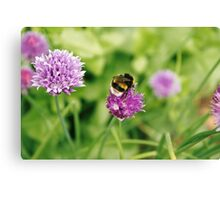 Bumble bee, Geffrye Museum, Shoreditch, London Canvas Print