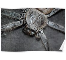 Couch Spider Poster