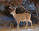 River Whitetail by Rodney55