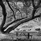Bear River Picnic Tree by NancyC