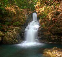 Coachwood Falls, Dorrigo National Park by Harley Kingston