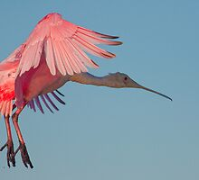 Applying the pink brakes by Phillip  Simmons