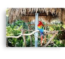 And along came polly Canvas Print