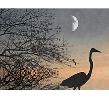 Soft And Tranquil Photographic Print