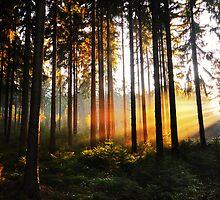 In The Wood by Marco Heisler