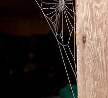 Frosty Cob Web by Dave  Knowles
