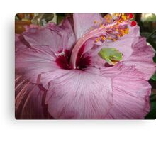 Tiny Green Frog in Mauve Hibiscus. Canvas Print