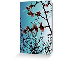 Spring Apricot Blossoms | Lomo Greeting Card