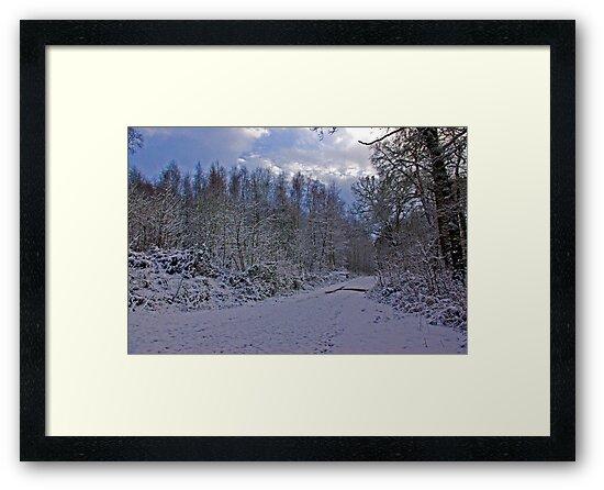 Winters Walk by Trevor Kersley