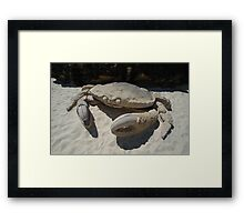 Crab @ Sculptures By The Sea 2010 Framed Print