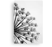 Winter Hogweed Metal Print