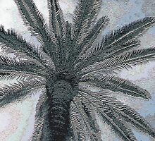 Palm Tree in Majorca  by Jubey