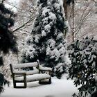 Dreamy Winter's Bench by Monica M. Scanlan