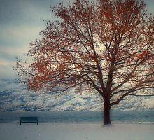 Winter in Peachland 2 by Tara  Turner