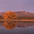 Golden Hour at Bosque del Apache National Wildlife Refuge by TheBlindHog