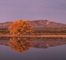 Golden Hour at Bosque del Apache National Wildlife Refuge by Mitchell Tillison