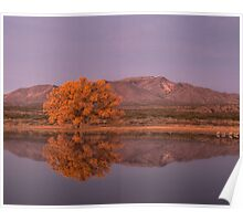 Golden Hour at Bosque del Apache National Wildlife Refuge Poster
