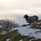 Happy New Year Mr Sheep by sylentbob