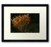Sunset Brush Framed Print