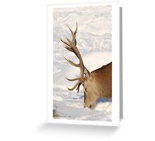 Red Deer above Aberfeldy Greeting Card
