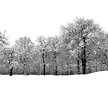 Fresh as the driven snow Photographic Print