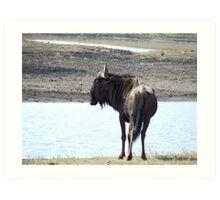 Wildebeest Art Print