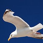 seagull by bfc1