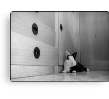 Cheeky little muzzle Canvas Print