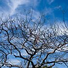 Bare Tree by robert cabrera