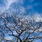 Bare Tree by robert cabrera