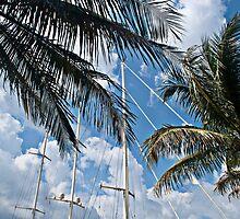 Sail Boat Mast Through the Palms by robert cabrera