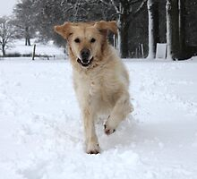 Running through the snow by Catherine Brookes