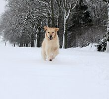 Running through the snow 2 by Catherine Brookes