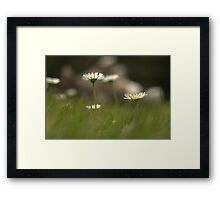 summer's day Framed Print