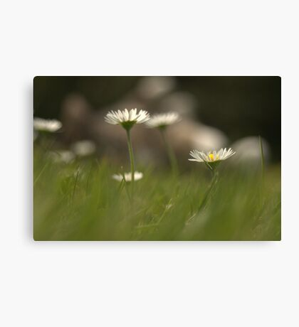 summer's day Canvas Print