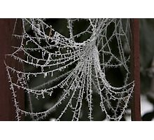 Icy web Photographic Print